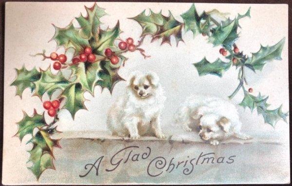 画像1: Postcard クリスマス 2匹の白い犬 ホーリー H.Maguire  未使用 (1)