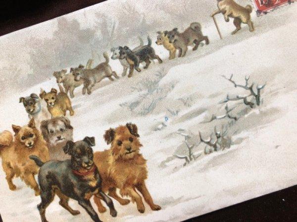 画像1: Postcard 並んで歩く犬たち Helena Maguire (1)