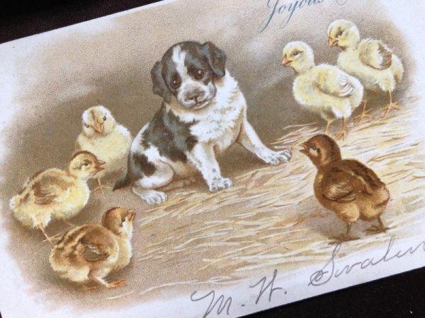 画像1: Postcard 子犬とヒヨコ Helena Maguire 1904年 (1)