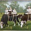 画像1: Postcard  牛のミルクを吸う赤ちゃんたち (1)