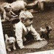 画像3: Postcard  小さな写真屋さん テディベア 犬のぬいぐるみ  (3)
