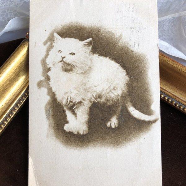 画像1: ▼SALE 500▼ Postcard 猫 (1)