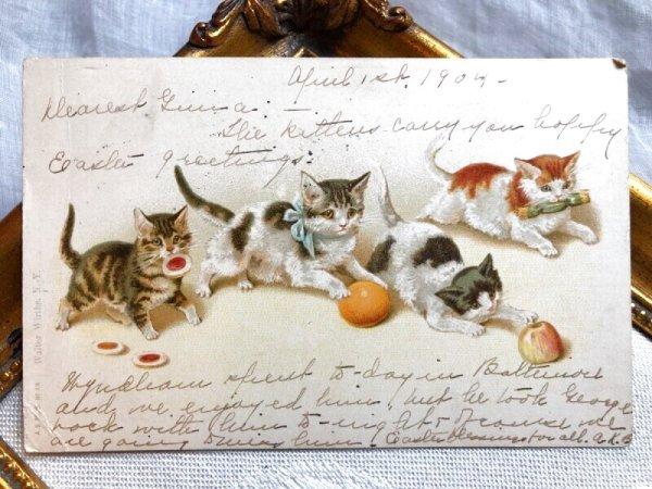 画像1: Postcard  果物と遊ぶ子猫たち Helena Maguire (1)