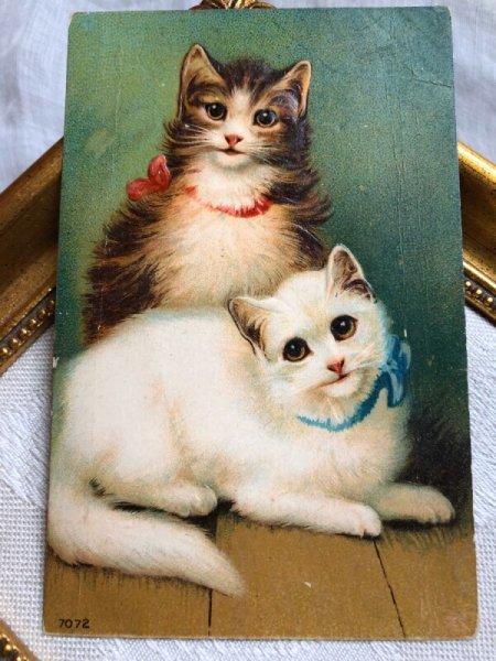 画像1: ▼SALE500▼ Postcard  2匹の猫 折れあり (1)