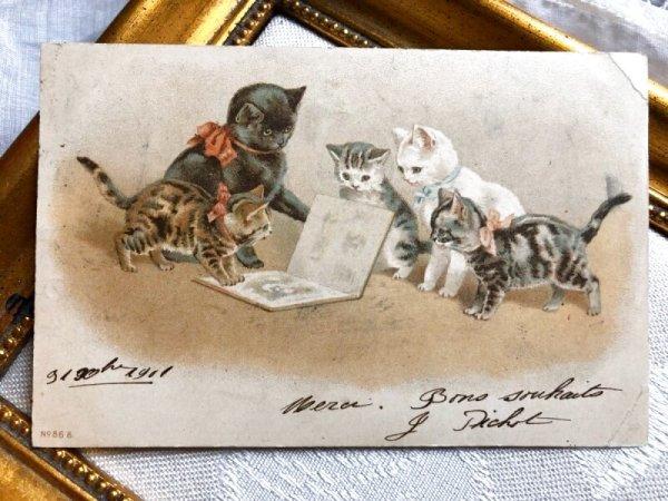 画像1: Postcard   絵本を読む猫たち フランス1902年 Helena Maguire (1)