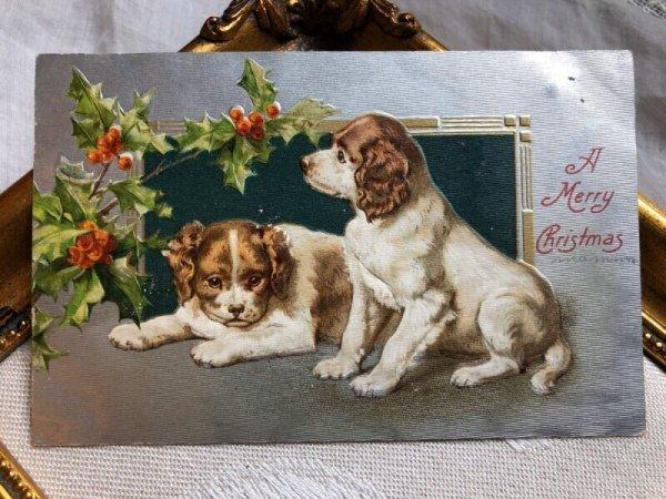 画像1: Postcard   クリスマス 2匹のスパニエル犬 Helena Maguire (1)