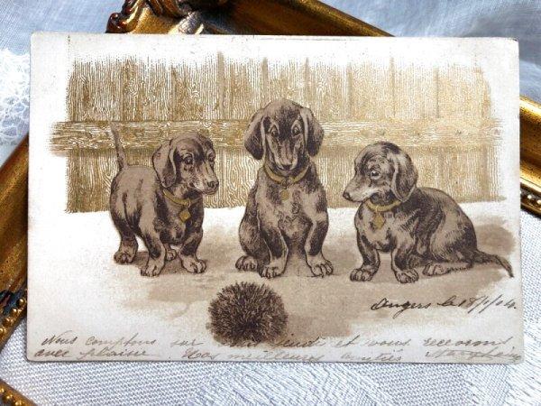 画像1: Postcard   ハリネズミと3匹のダックスフンド犬 フランス1904年 (1)